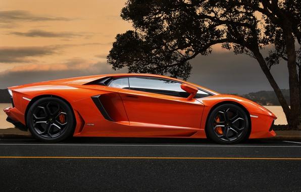Picture the sky, orange, tree, Lamborghini, supercar, supercar, sky, tree, orange, aventador, lp700-4, Lamborghini, aventador