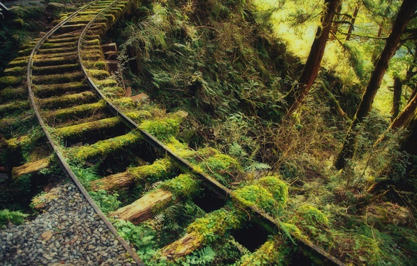 Picture road, greens, forest, thickets, rails, moss, iron, sleepers, old