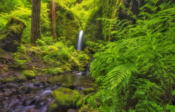 Picture forest, waterfall, Oregon, river, fern, Oregon, Columbia River Gorge, Mossy Grotto Falls, the Columbia river …