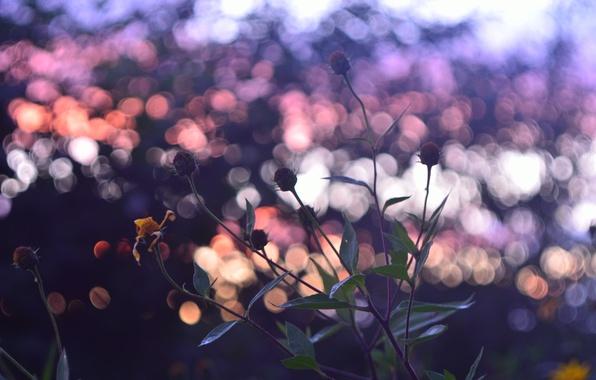 Picture autumn, the sky, color, sunset, mood, Flowers, by mike pro