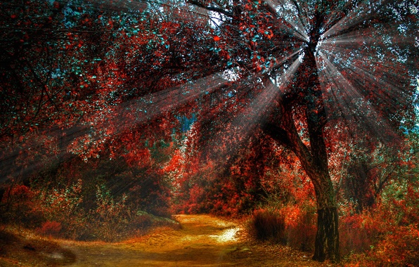 Picture autumn, forest, trees, paint, path, rays of light