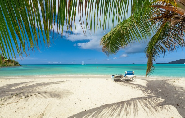 Picture sand, sea, beach, the sky, the sun, clouds, branches, tropics, palm trees, coast, yacht, horizon, …