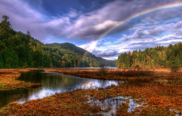 Picture forest, clouds, rainbow