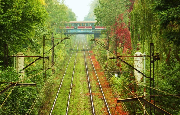 Picture grass, trees, rails, train, the car