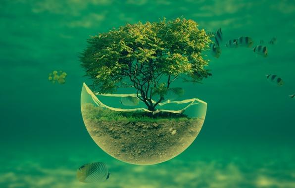 Picture grass, water, fish, tree, the ocean, earth, splinter