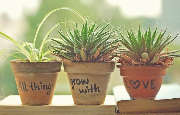 Picture greens, leaves, the sun, photo, mood, the inscription, books, plants, pots, pots