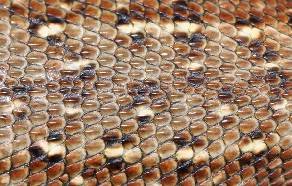 Picture macro, leather, lizard