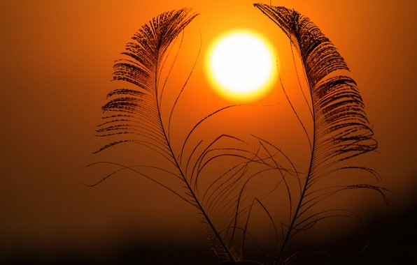 Picture the sky, the sun, feathers