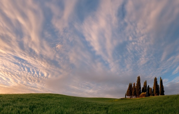 Picture field, the sky, landscape