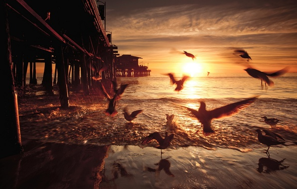 Picture sunset, birds, bridge, United States, California, Santa Monica