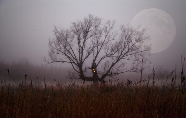 Picture field, night, fog, tree, branch, the moon, Bush, Halloween