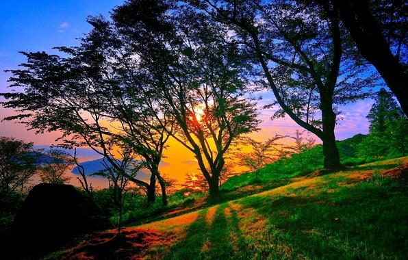 Picture dark, Nature, sky, trees, landscape, sunset, blue, park, beautiful