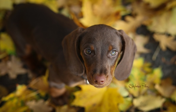 Picture autumn, look, nature, each, dog