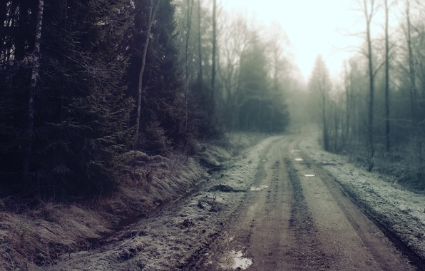 Picture road, forest, dirt