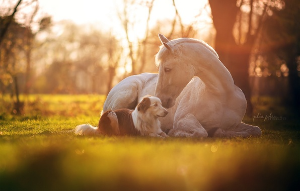 Picture light, horse, dog