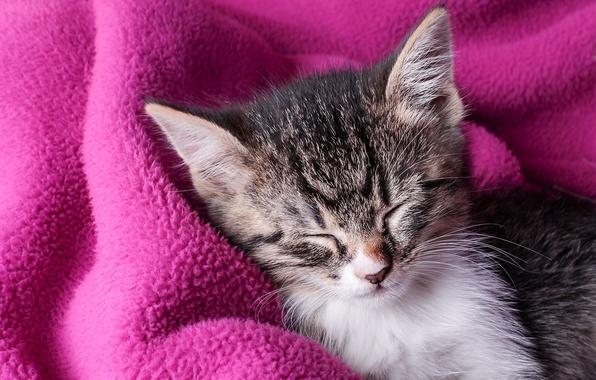 Picture sleep, plaid, kitty, sleep