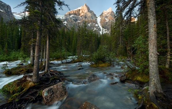 Picture forest, trees, mountains, river, Canada, Banff National Park, Canada