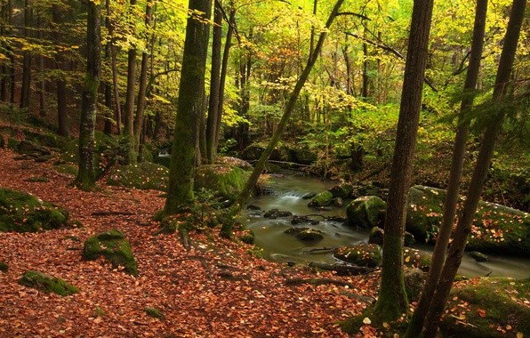 Picture autumn, forest, leaves, trees, nature, stream, photo, Germany, Bayern