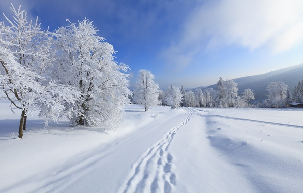 Picture winter, the sky, clouds, snow, trees, landscape, mountains, nature