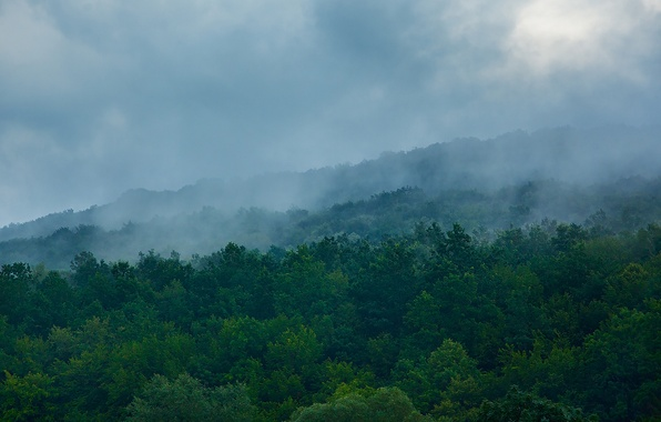 Picture greens, forest, clouds, trees, mountains, blue, nature, green, fog, green, hills, morning, slope, hill, haze, …
