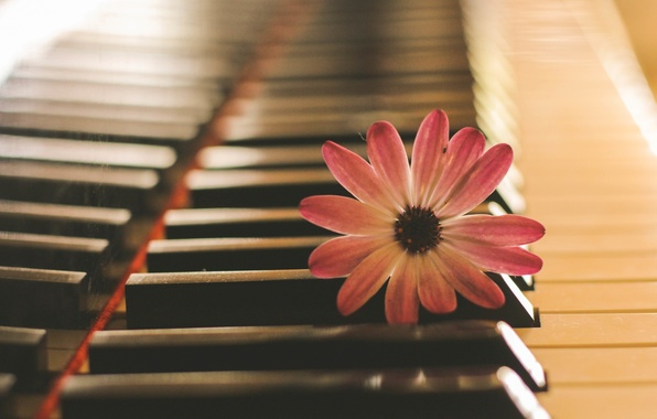 Picture flower, music, piano