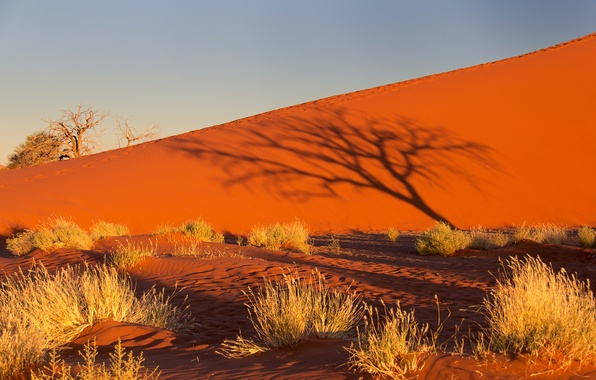 Picture sand, the sky, sunset, tree, Bush, shadow, barkhan, Africa, Namibia, the Namib desert