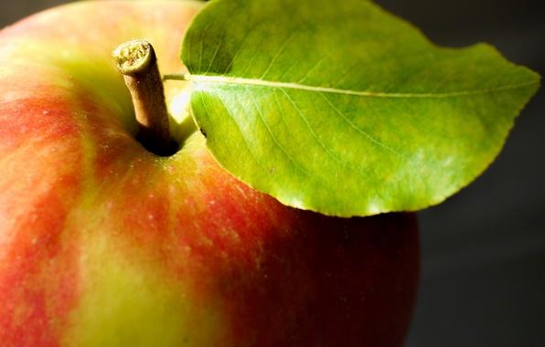Picture macro, Apple, food, fruit