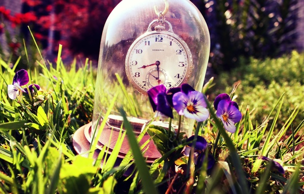 Picture summer, grass, glass, watch, Pansy