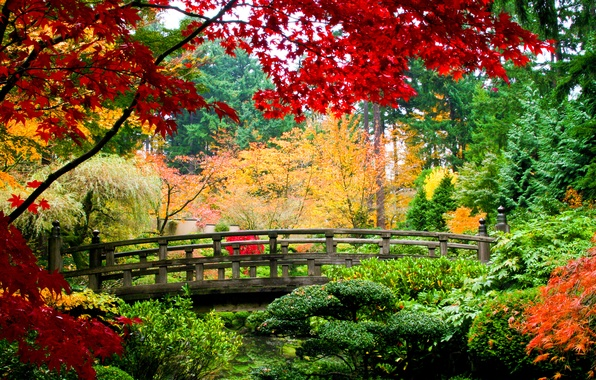 Photo wallpaper Park, trees, the bushes, bridge, autumn