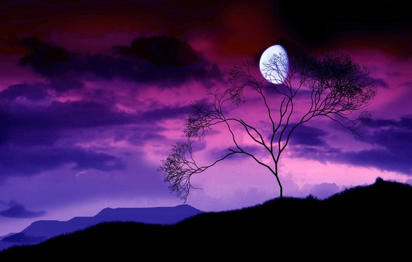 Picture night, branches, tree, the moon, 156