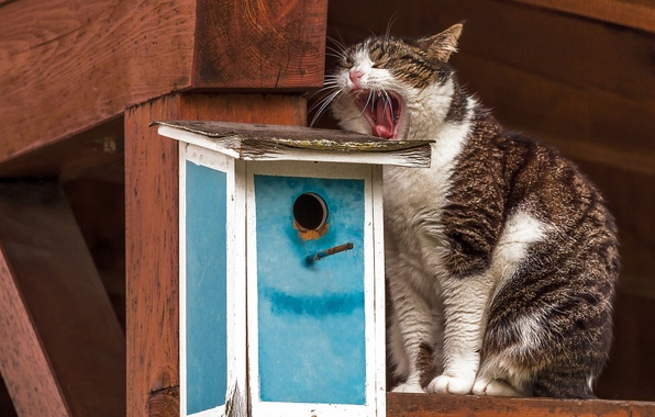 Picture cat, cat, birdhouse, waiting, yawns, yawn