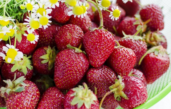 Picture flowers, berries, chamomile, strawberry
