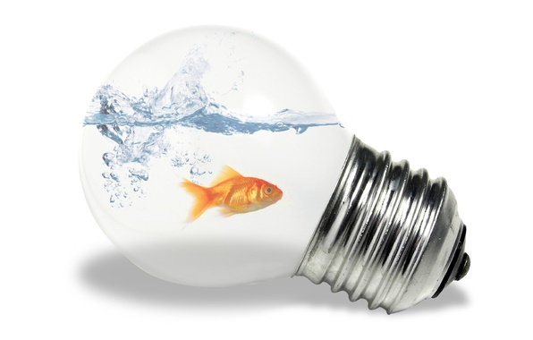 Picture white, light bulb, water, fish