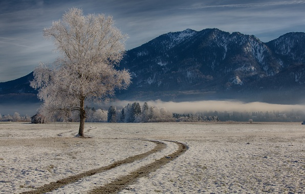 Picture winter, mountains, tree, Germany, Bayern, Germany, Bavaria