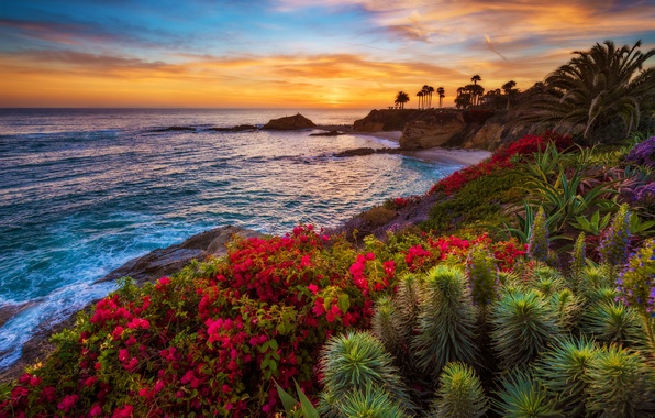 Picture sea, sunset, flowers, tropics, palm trees, coast, horizon, the bushes