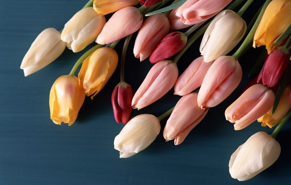 Picture surface, flowers, bouquet, tulips, buds, colorful