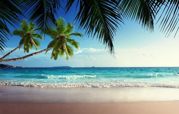 Picture sand, sea, beach, the sky, the sun, tropics, palm trees, the ocean, shore, summer, sunshine, …