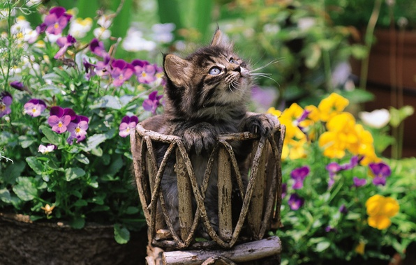 Picture cat, grass, cat, flowers, kitty, pussy, kitty, cat, Kote