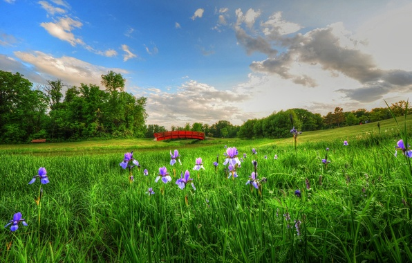 Picture the sky, clouds, flowers, bench, meadow, picnic, the bridge