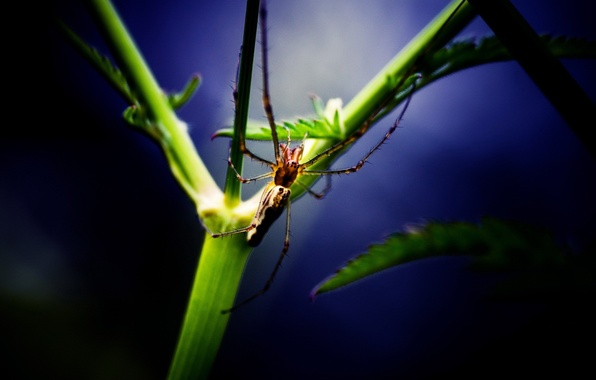 Picture sheet, plant, Spider