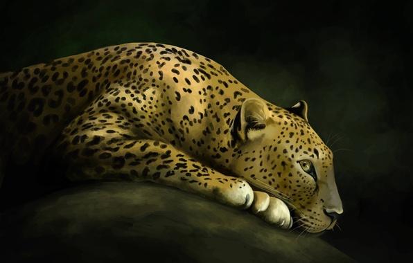 Picture cat, stone, predator, art, leopard, wild
