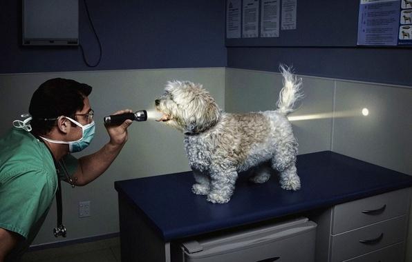 Picture light, the vet, flashlight