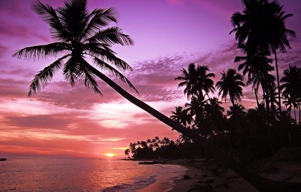 Picture sea, wave, beach, the sky, landscape, sunset, palm trees, island, silhouettes