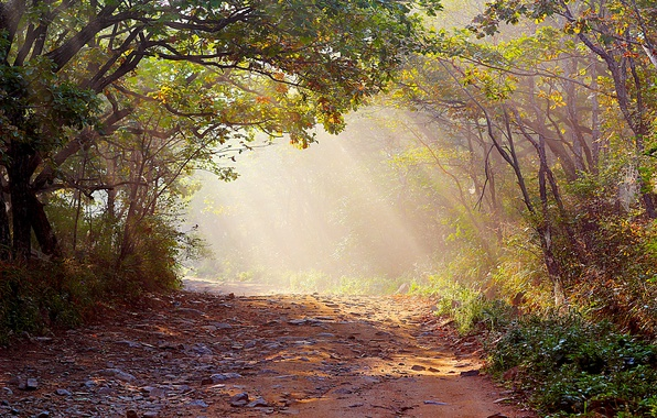 Picture road, forest, nature, fog, photo, rays of light