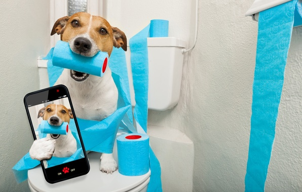Picture paper, photo, the situation, humor, toilet, the toilet, blue, the, toilet, Jack Russell Terrier, smartphone