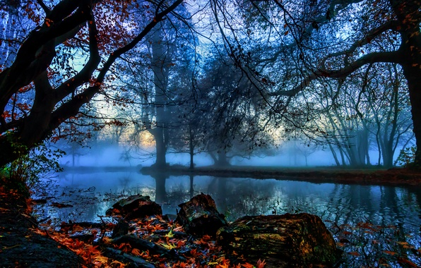 Picture autumn, leaves, trees, branches, fog, stones, England, London, river, Morden Hall Park