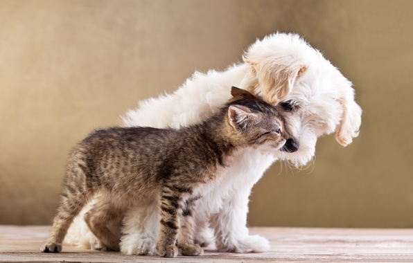 Picture cat, love, kitty, puppy, love, puppy, kitten, Friends, small dog and cat together, Friends, small …