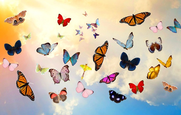 Picture the sky, clouds, butterfly, collage