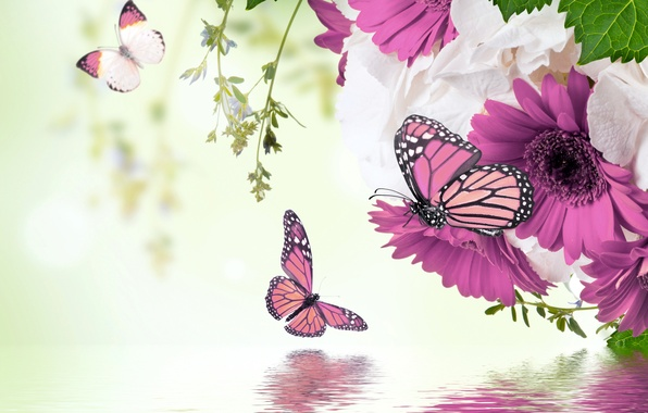 Picture water, butterfly, reflection, spring, flowering, water, blossom, flowers, spring, purple, butterflies, gerbera, refection