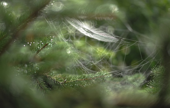 Picture drops, macro, branches, web, rozmyte